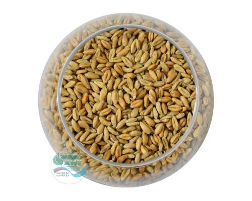 Пшеница для проращивания натуральная Алтайкрупа 100 гр - низкая цена, высокое качество